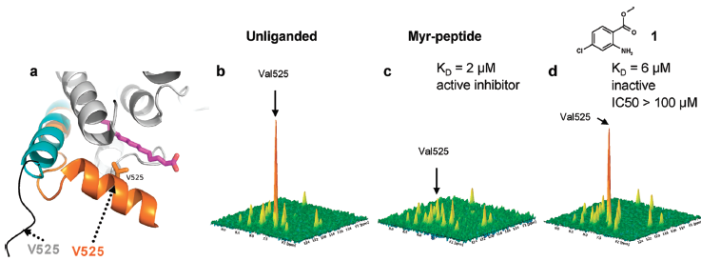 NMR could be used as a conformational assay to distinguish between ligands that induce conformational change (functional antagonists ) and those that do not (agonists – inactive inhibitors).