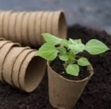 Promotional image: plant seedlings