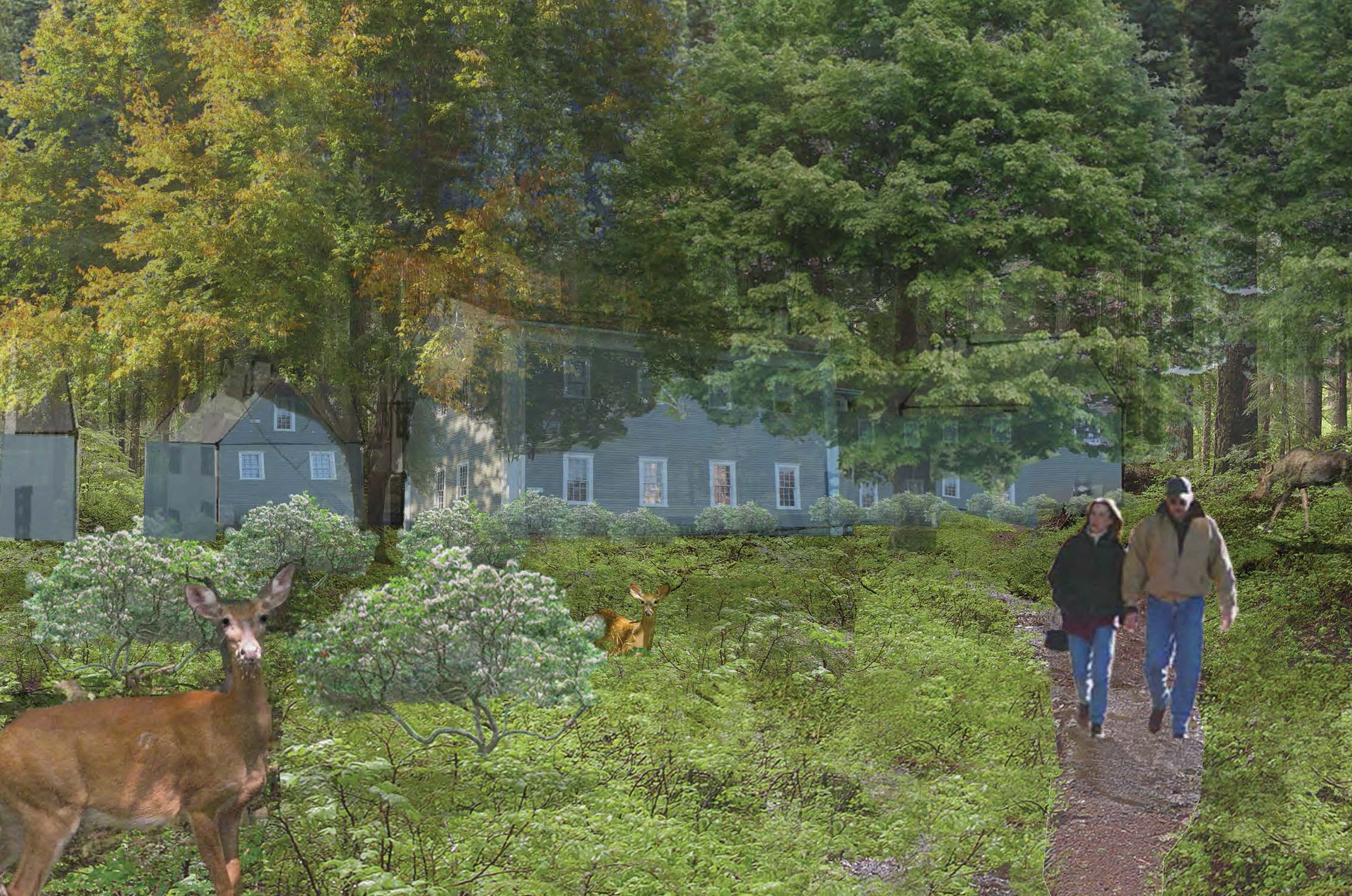 Site Planning for Fieldstone Farm, Princeton, MA - View From Shrubland Into Forested Housing - KEITH HANNON