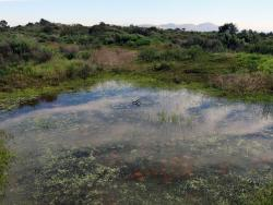 Vernal Pool.  Photo: Joanna Gilkeson USFWS