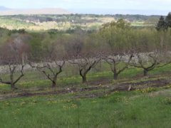 UMass Cold Spring Orchard