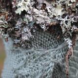 """Mended Tree"" by Jenine Shereos"