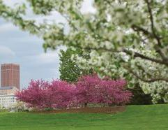 Spring campus image