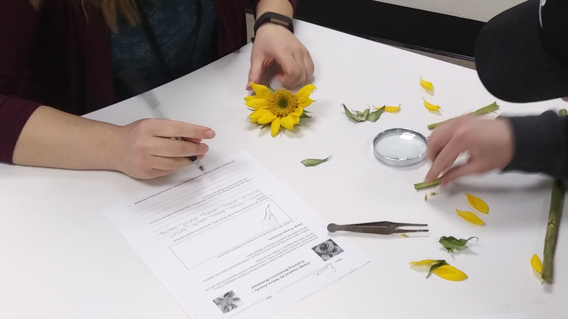 students taking apart a flower