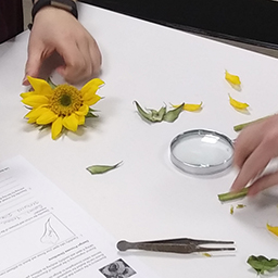 flower being examined