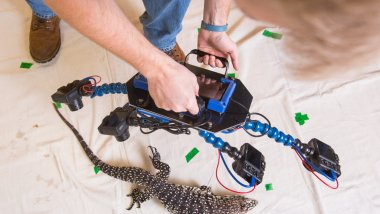 The Beastcam, a device that creates 3-D models of live animals was created in the lab of Biology Professor Duncan Irschick and two undergraduate students, Dylan Briggs and Kasey Smart.