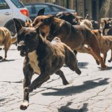 still from the film White God showing a pack of dogs running down a city street.