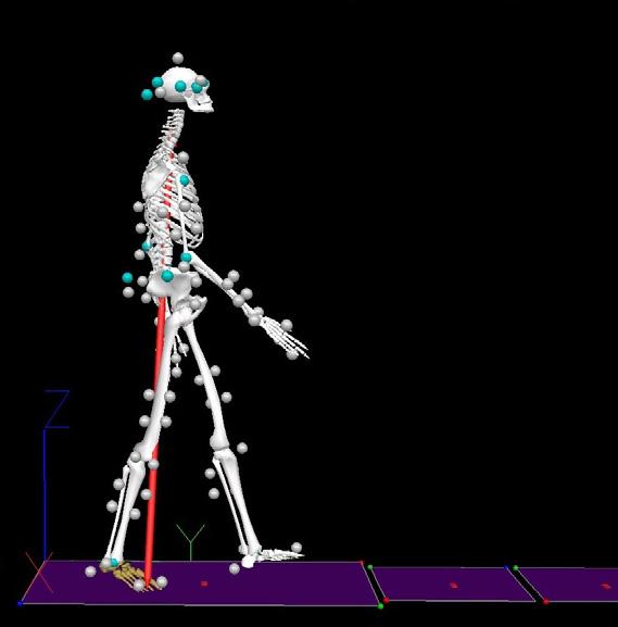 Human Motion : Core Facilities : UMass Amherst