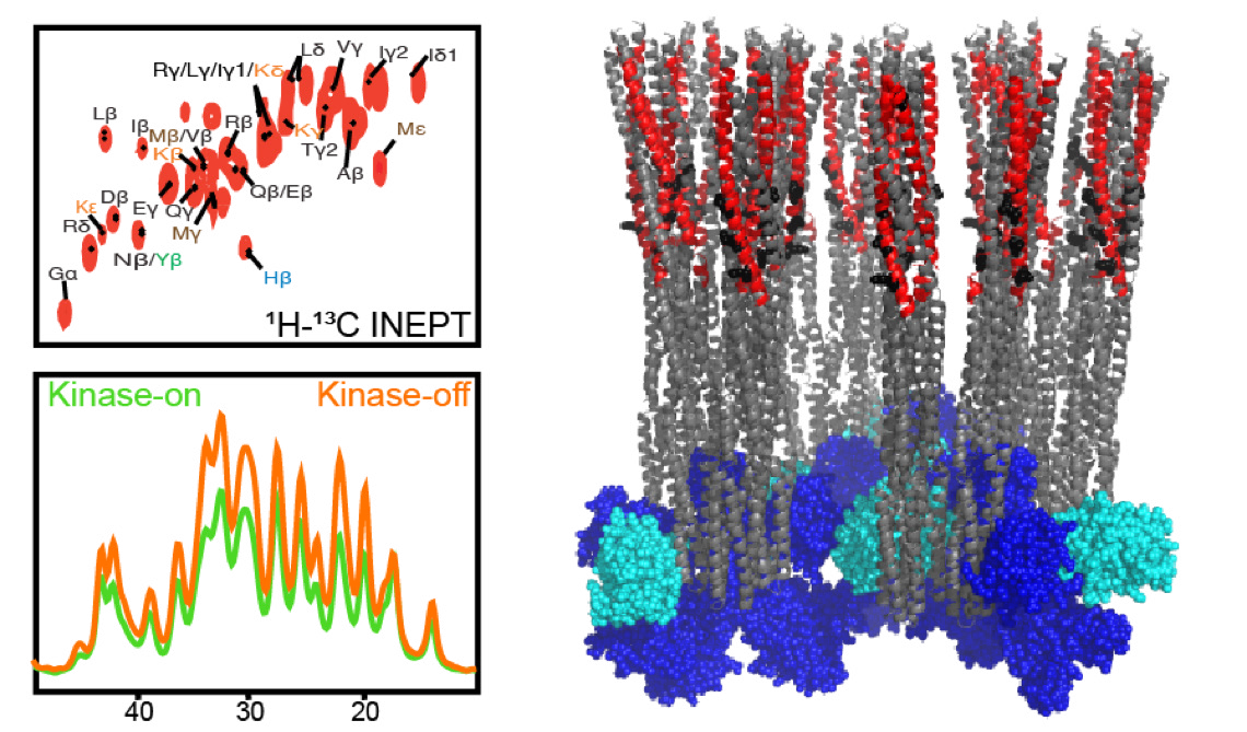Identifying Signaling-Related Dynamics by NMR