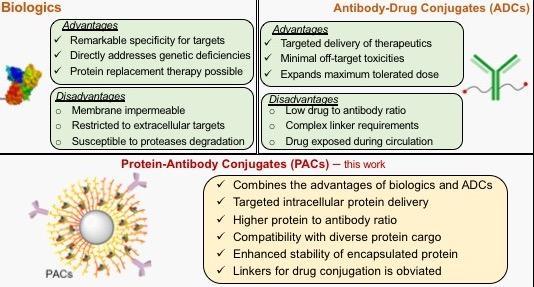protein-antibody conjugate (PAC) diagram