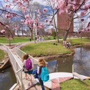 UMass Campus Pond