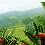 A rainforest in Costa Rica