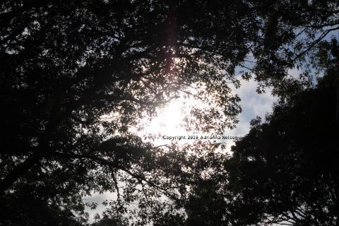 Photograph of Sunlight Through Trees