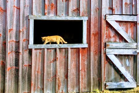 Cat in barn window