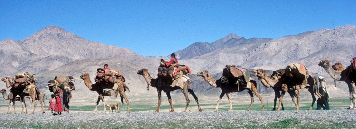 Nomads riding camels in a desert