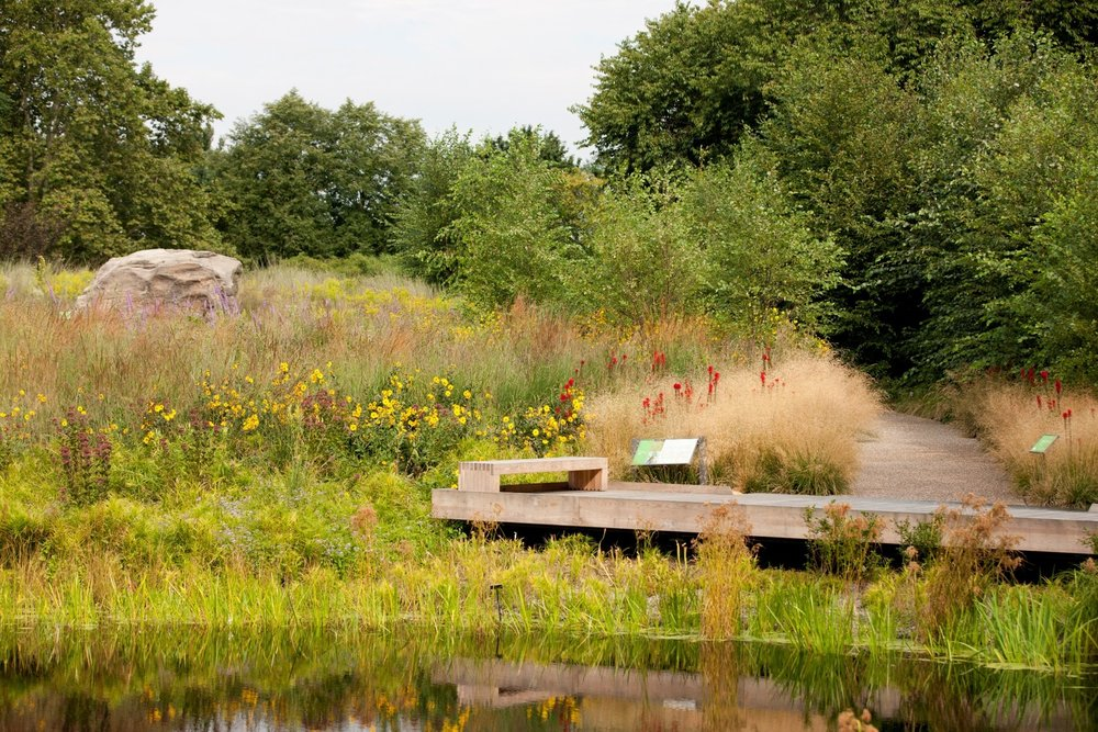 The meadow at the NYBG Native Plant Garden. Thomas Rainer was project manager of this project from proposal through construction documentation during his time at Oehme, van Sweden & Associates. Design by OvS. Image by Ivo Vermulean.