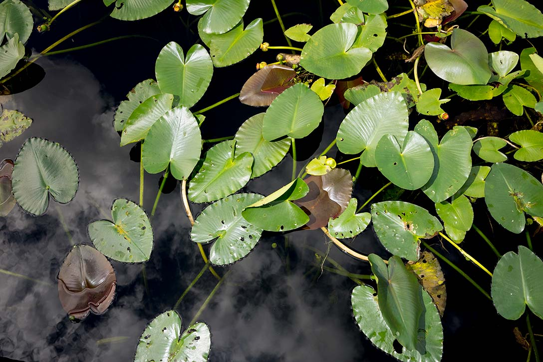 Plants in the Everglades