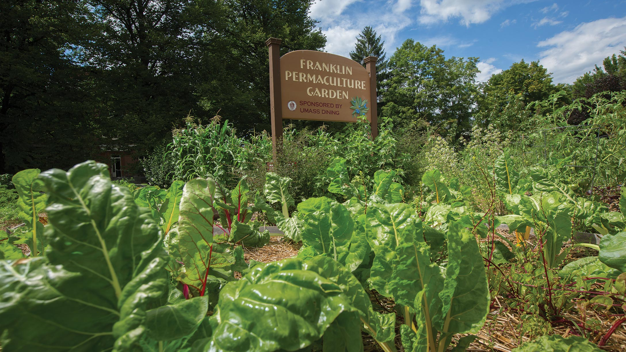 Swiss chard, corn, and other crops grow around the Franklin Permaculture Garden sign