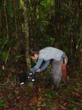 UMass Amherst PhD student Carolina Sáenz-Bolaños sets up tree-cams to capture images of the jaguar