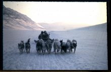 Wilce would pack his specimens in paint cans full of seawater and transport them back via dogsled. 1965.