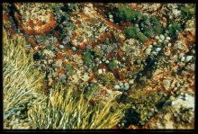 A tide pool in Labrador reveals the many textures of an ecosystem. Undated photo.