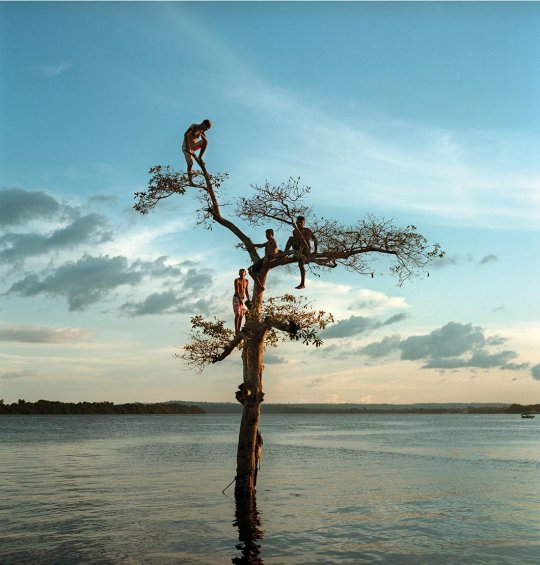 Four boys are seen high in a scrubby tree by the edge of a river.