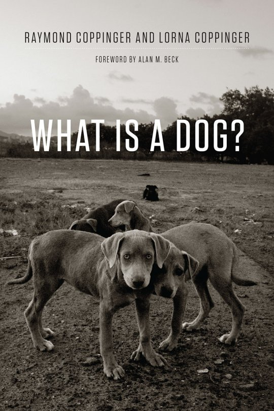 Book cover of 'What is a Dog?'