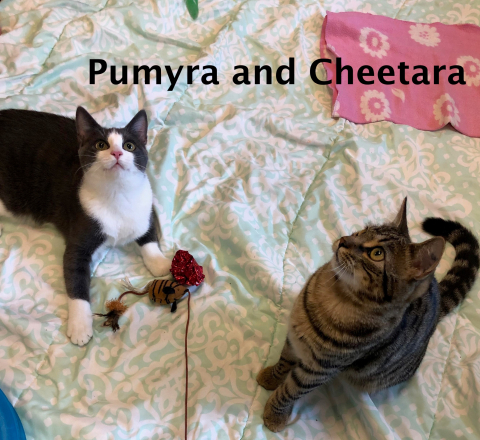 Pumyra and Cheetara