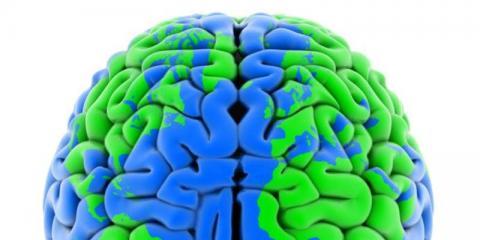 photo of the brain