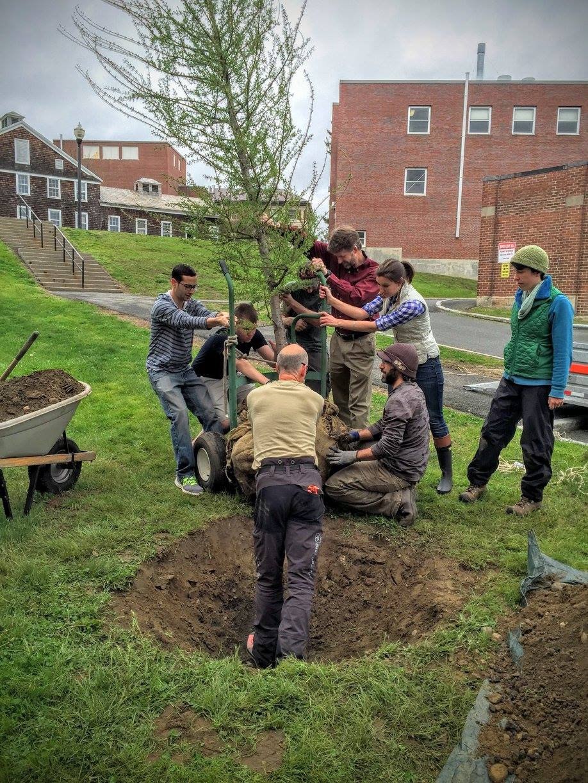MS3 Class of 2016 Planting Class Tree