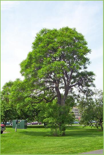1985 SSA Class Tree