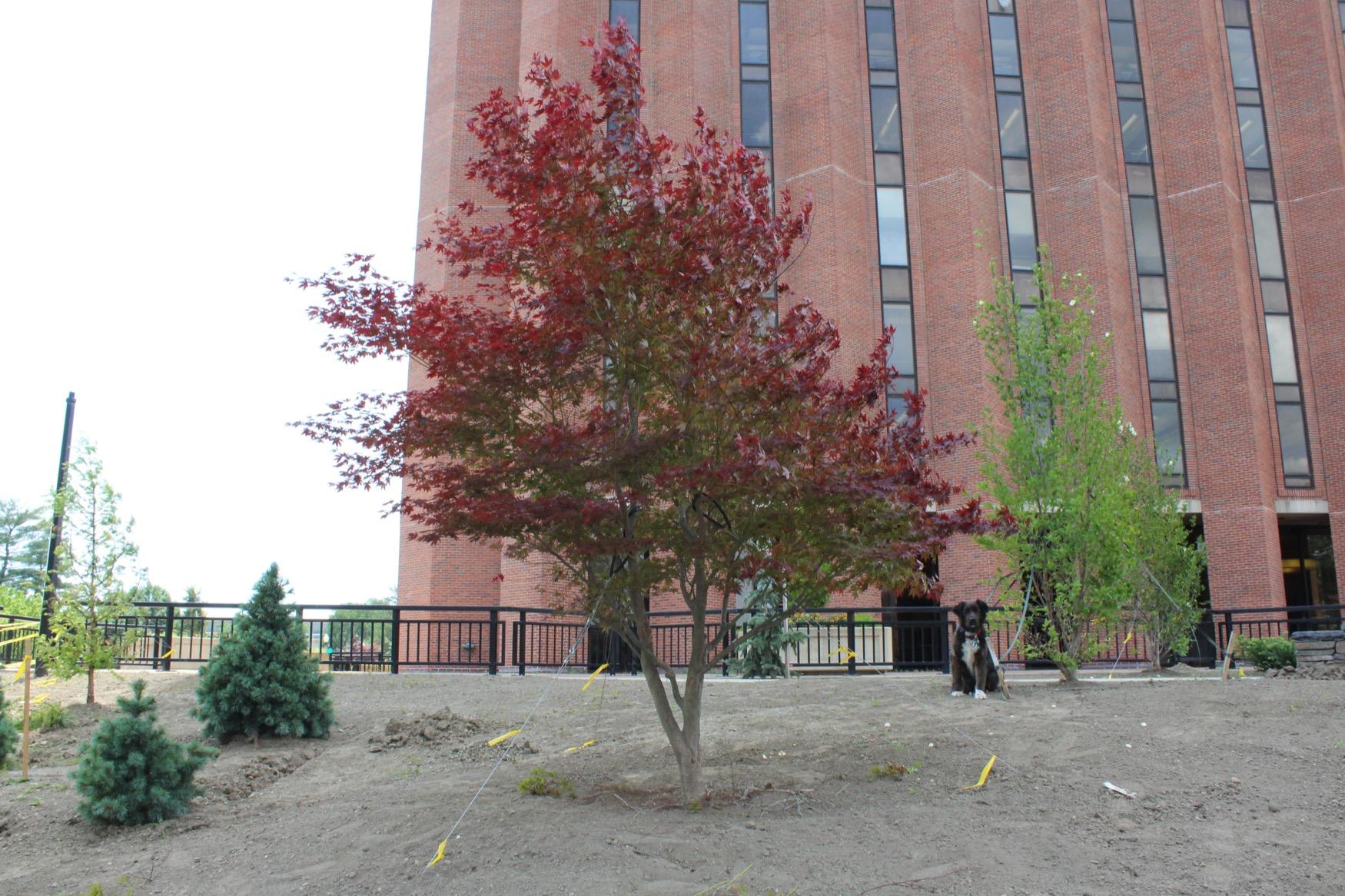 1955 UMA Class Tree