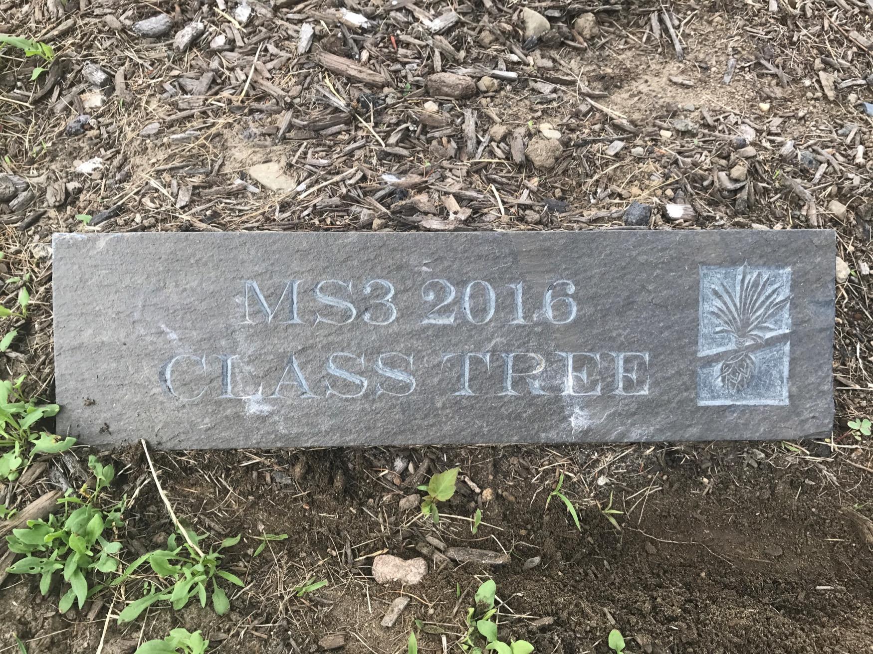MS3 Class Tree of 2016 Plaque