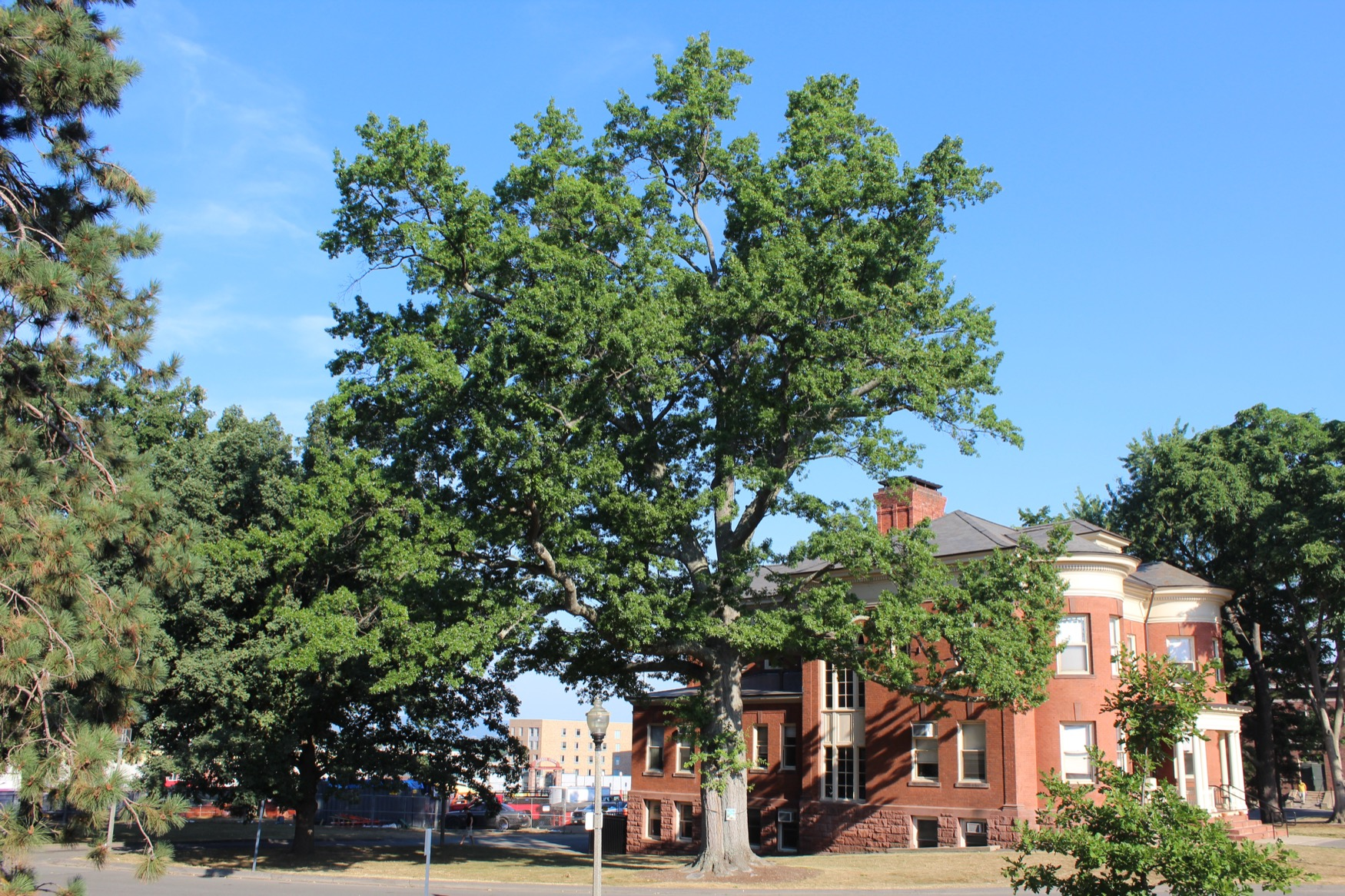 1908 UMA Class Tree