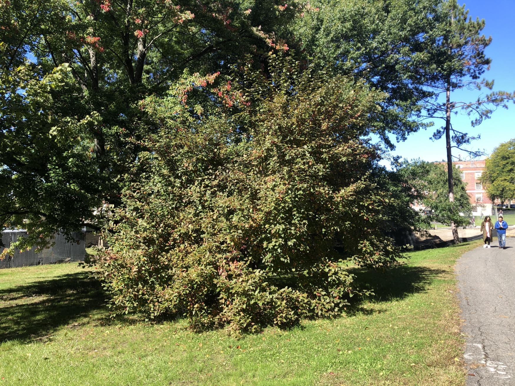 Gregory Thomson Tribute Tree