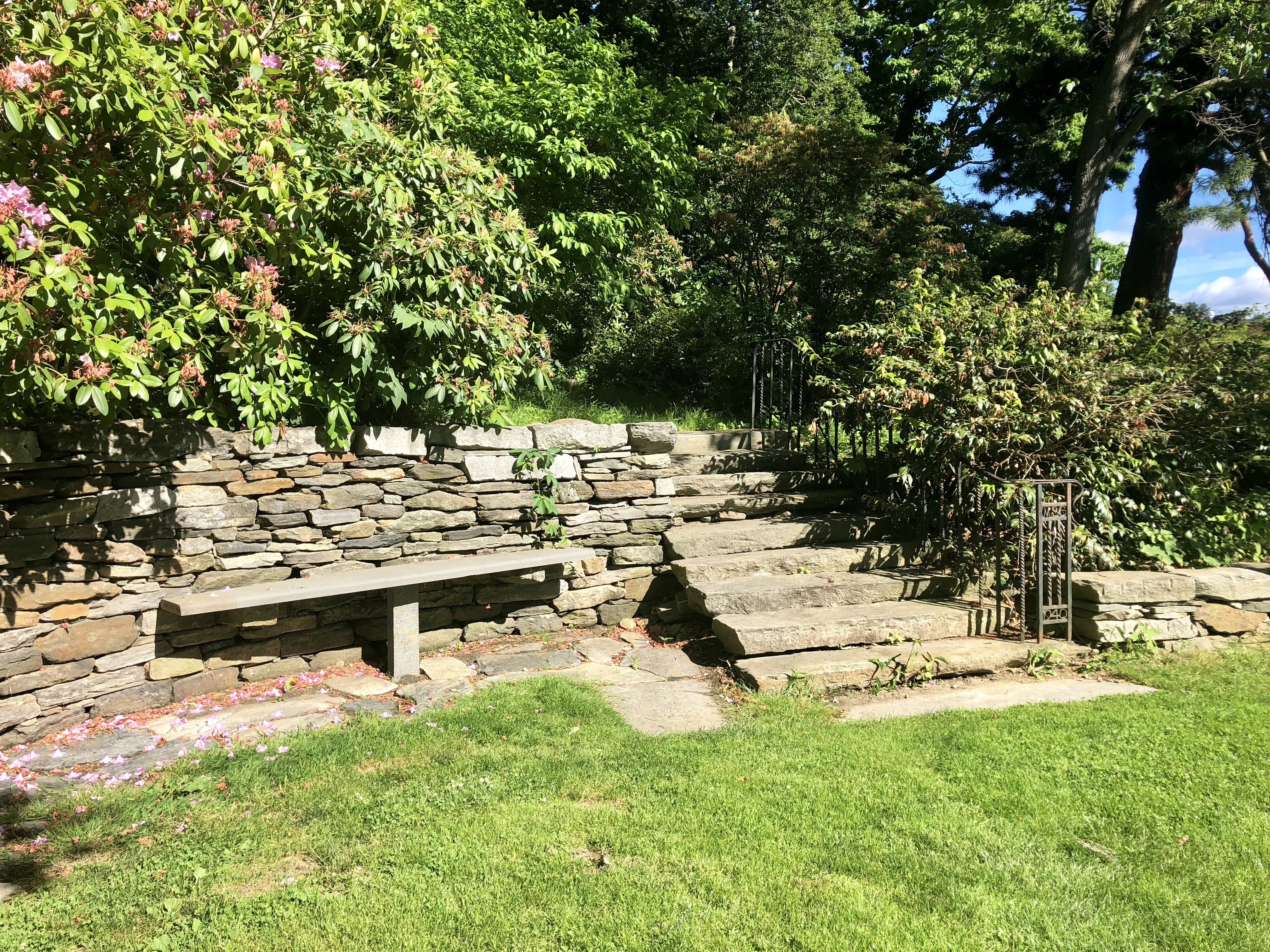 Staircase to Black Oak Heritage Tree