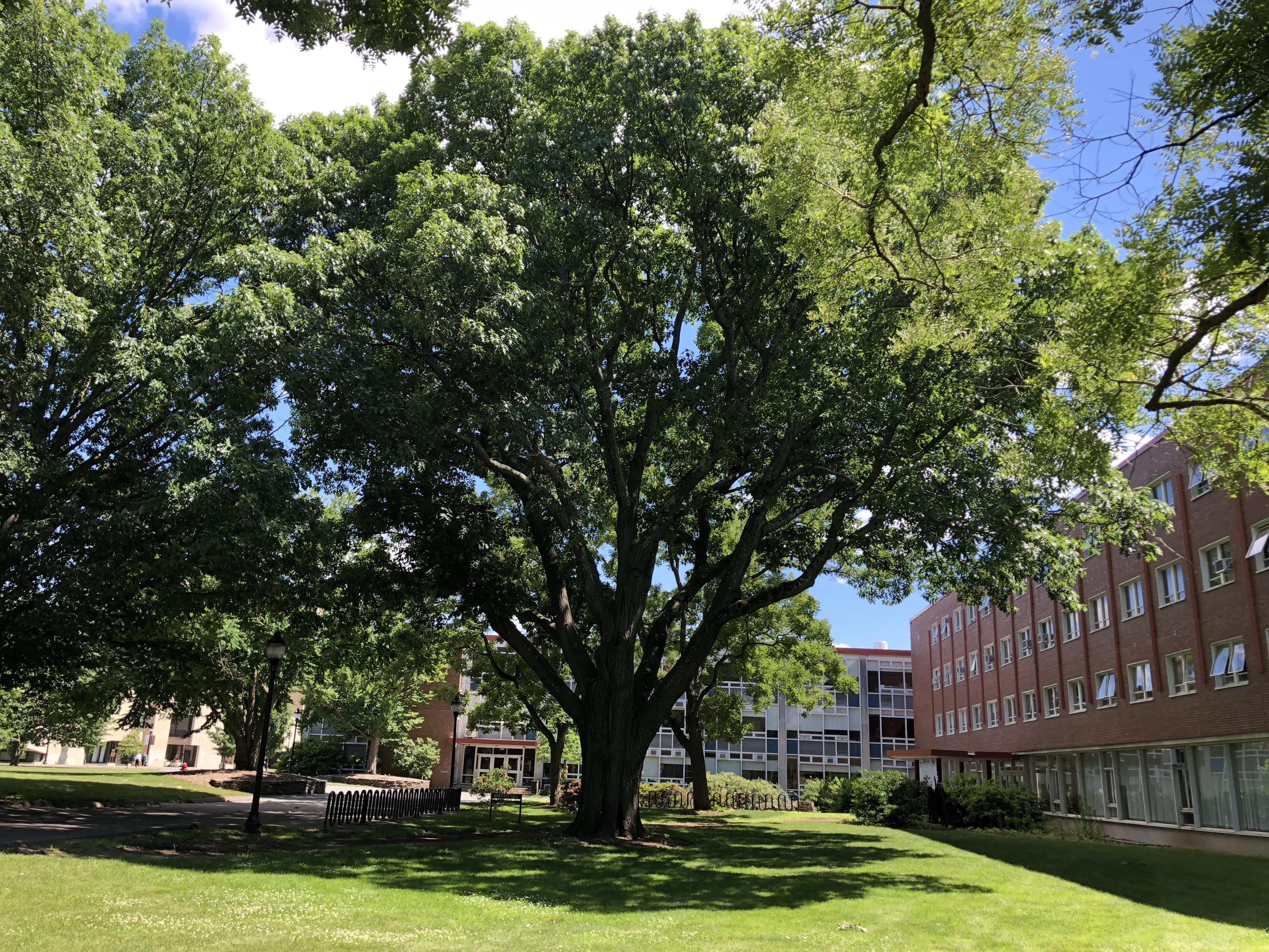 1900 MAC Class Tree