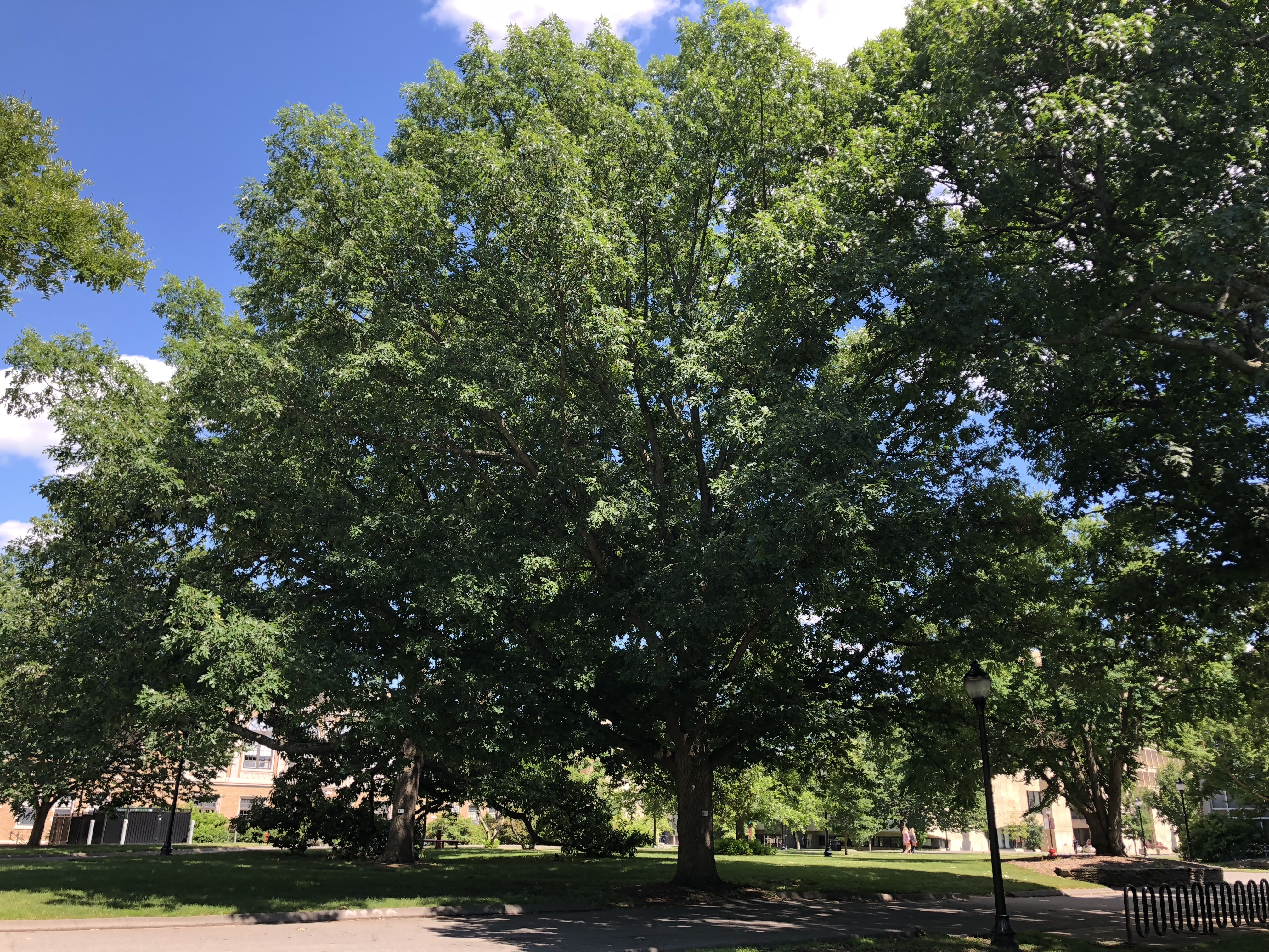 1941 SSA Class Tree