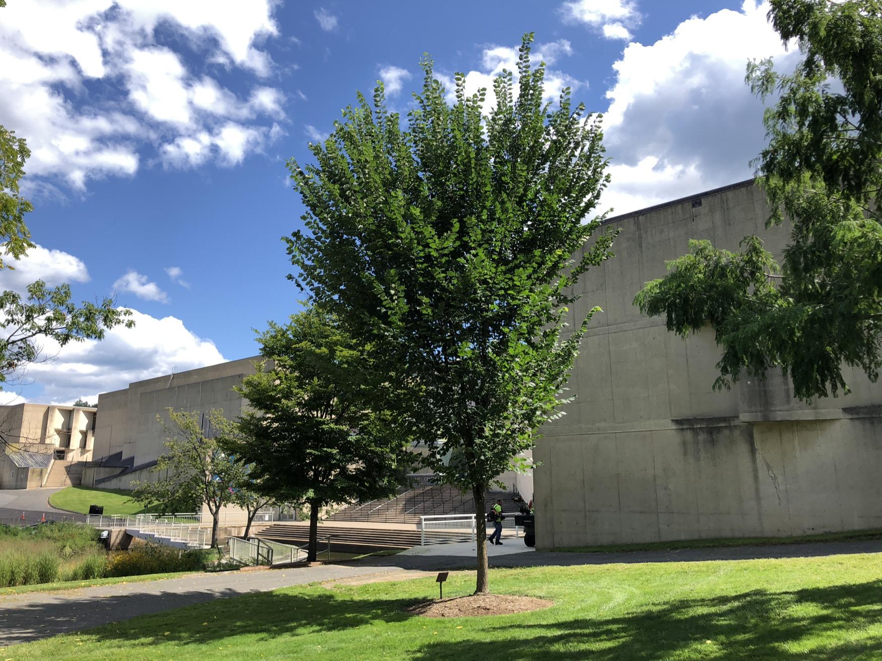 Barry Y. Weiner Tribute Tree