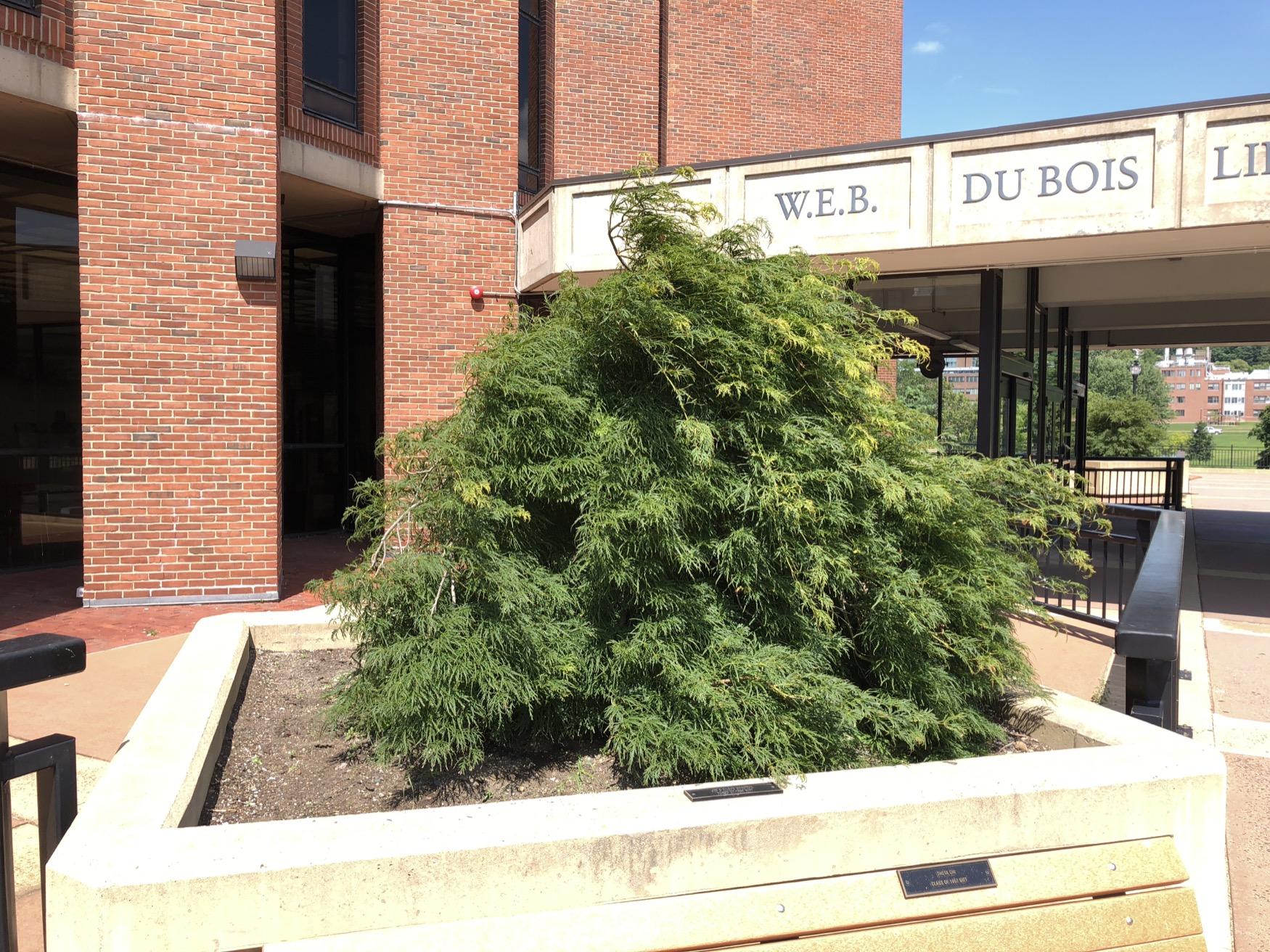 Jim & Eileen Mendrek Tribute Tree