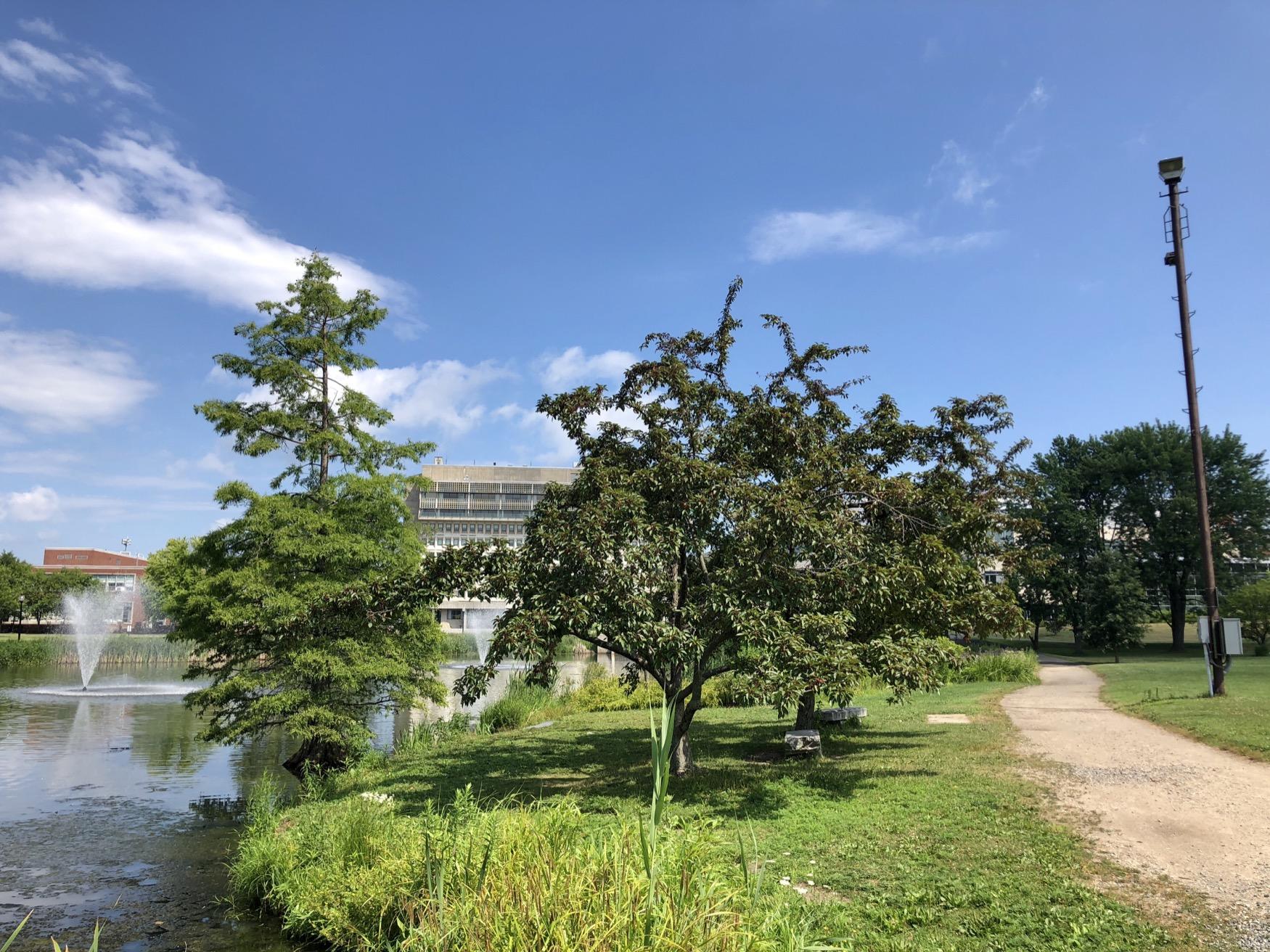 Laura T. Broad Tribute Tree