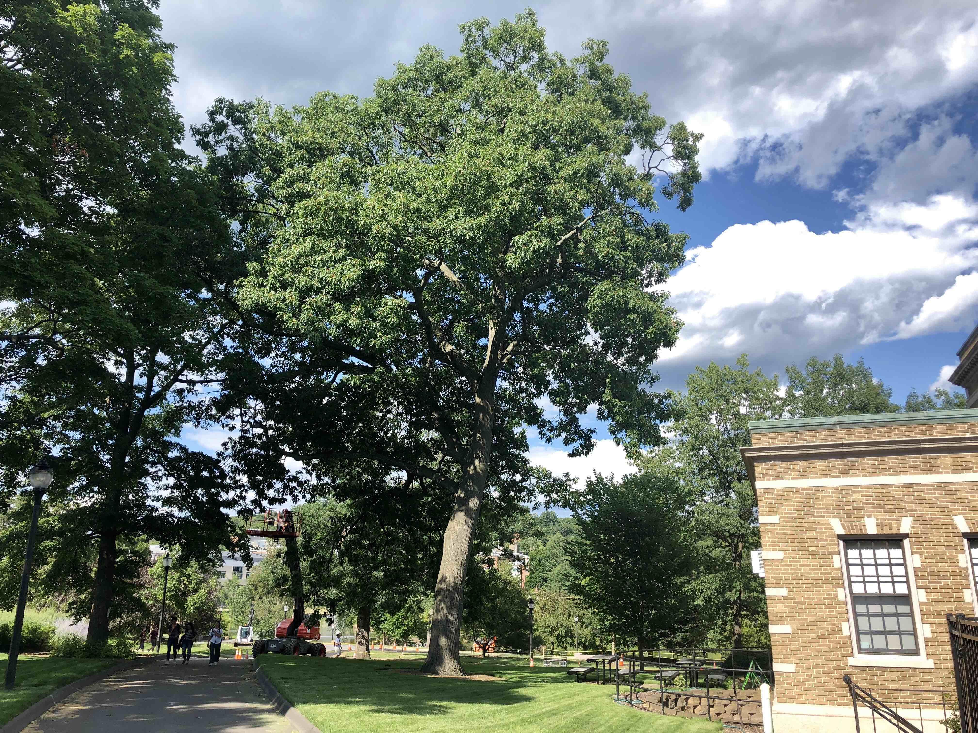1912 MAC Red Oak