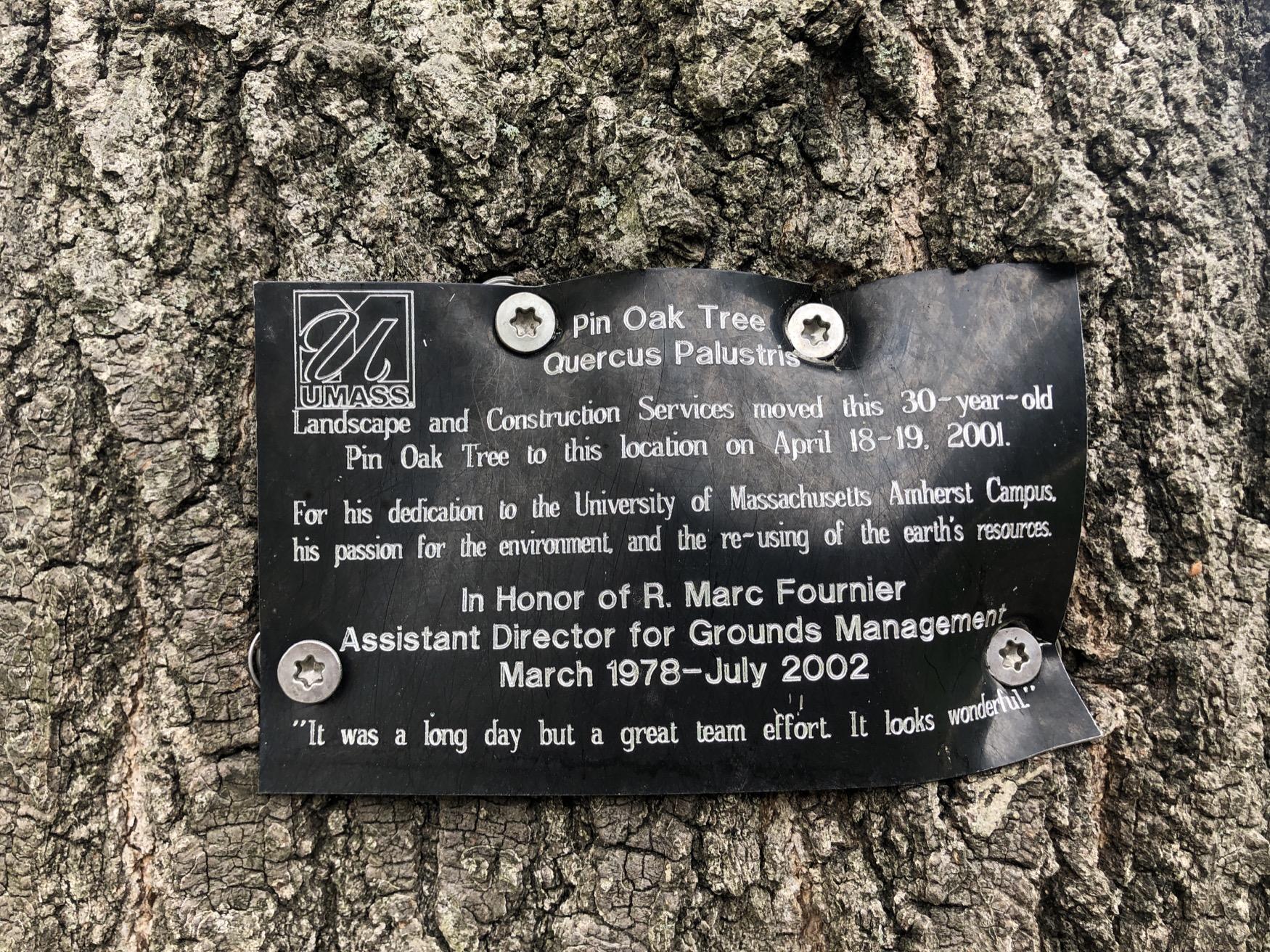 Marc Fournier Pin Oak Marker