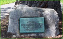 1878 Class Tree