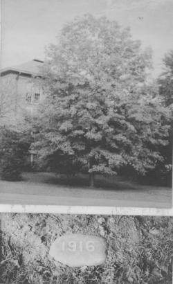 Class of 1916 tree and stone marker, ca. 1914