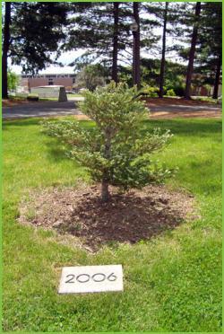 2006 UMA Class Tree