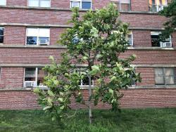 1999 UMA Class Tree