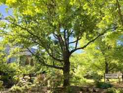 Malcombe McKenzie English Oak