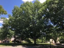 1940 SSA Class Tree, 1940 stone marker at base