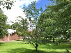 2003 UMA American Beech Class Tree